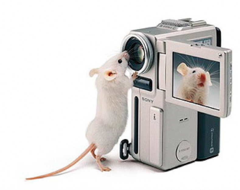 Kirsko Film Animals Sony Mouse.jpg