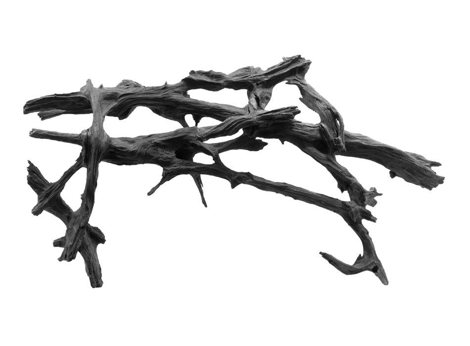 Bog Oak Root Lattice