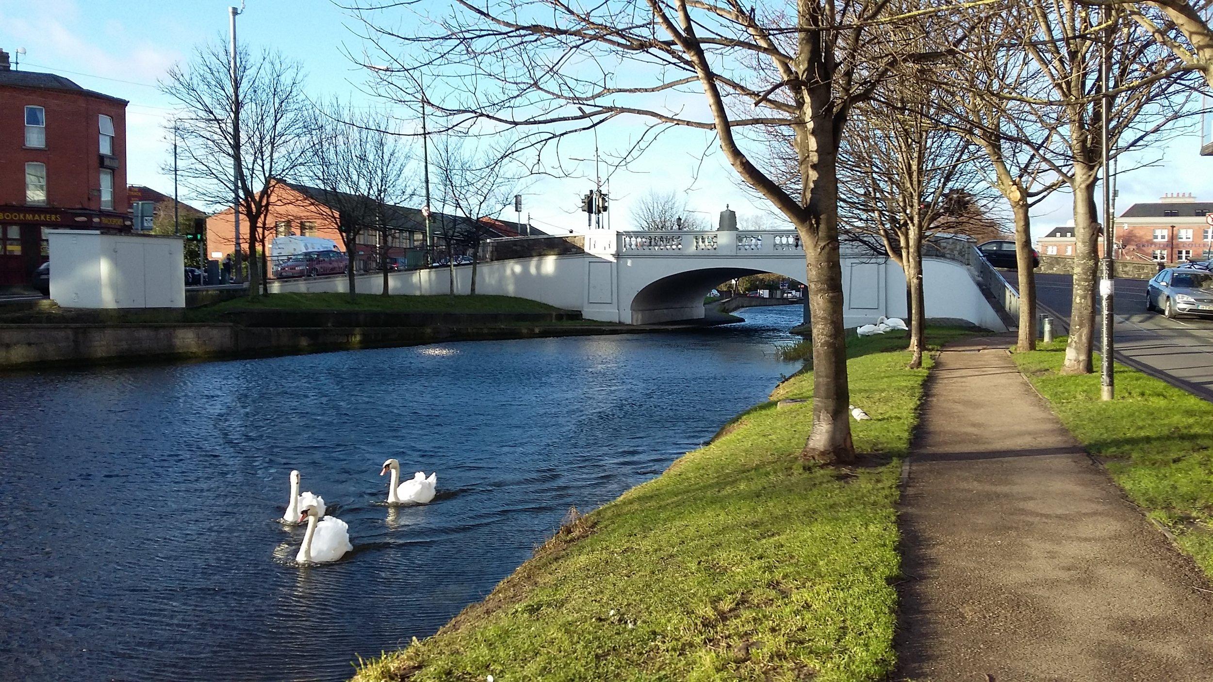 Canal-Swans.jpg