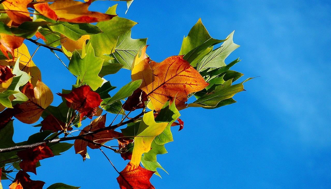 Planera-för-hösten.jpg