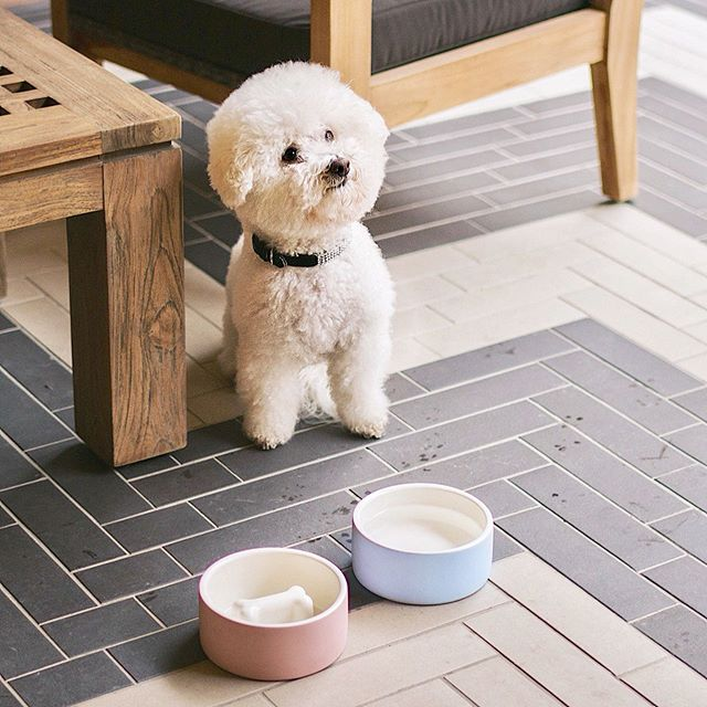 Parched pup? The Magisso Water Bowl keeps water cold for 8 hours💧 . . . . #shopOTBD #lovelocalOT #extraordinaryALX #womanowned #magisso #happypetproject #waterbowl #summerpets