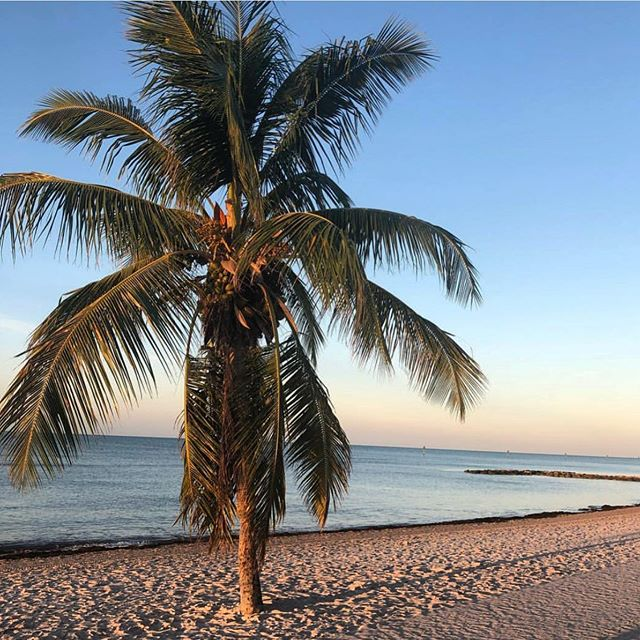 The palm tree symbolizes victory, peace, triumph, & life - the essence of wellness. @back_to_health_center's holistic approach to health & wellness strives to help you achieve all these things and stand tall (literally!)🏝 . . . . #shopOTBD #lovelocalOT #extraordinaryALX #womanowned #holistichealth #chiropractor #accupuncture #holisticwellness