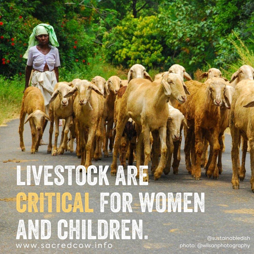 Livestock Critical for Women & Children.jpg