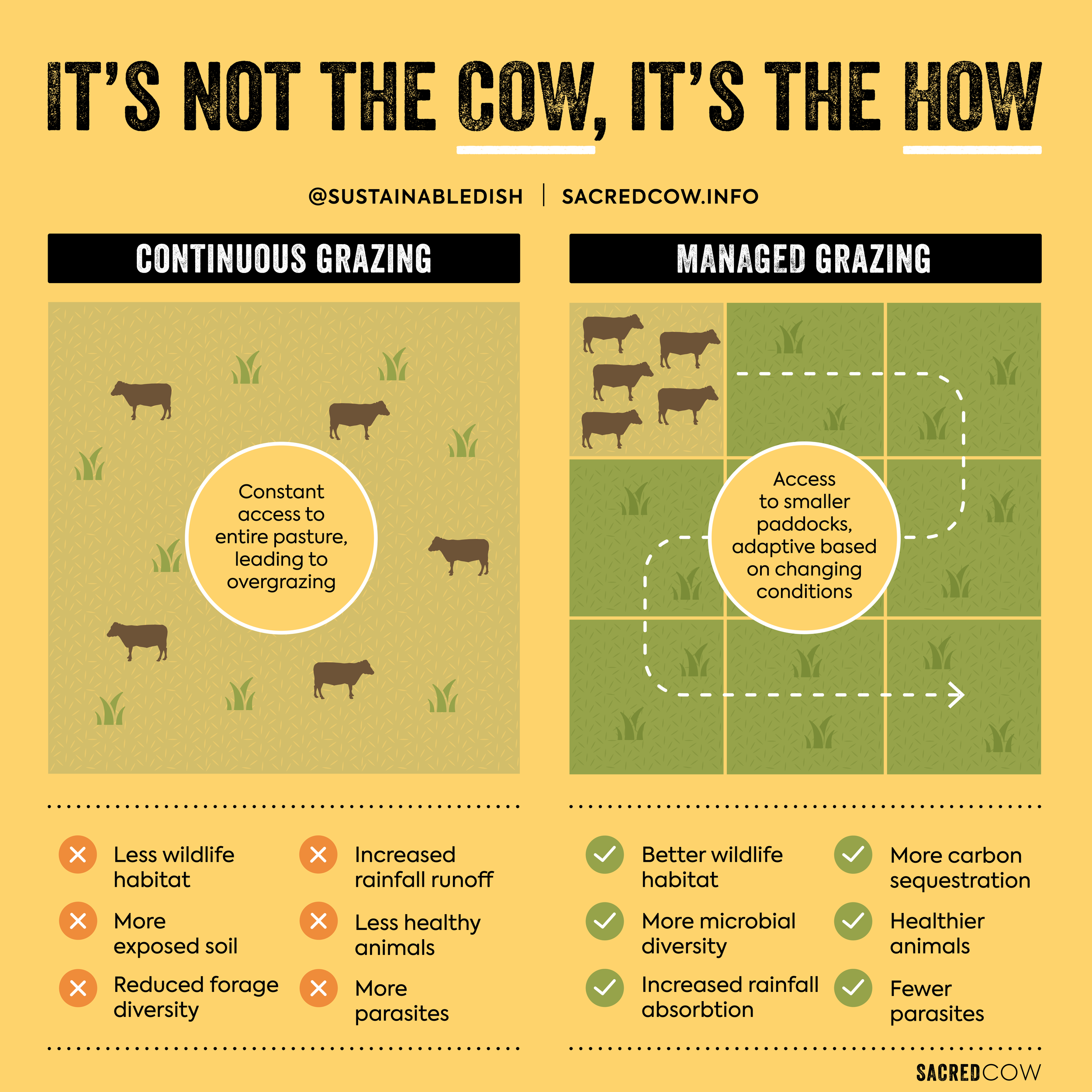 Sacred Cow Infographic J 3.2-01.png