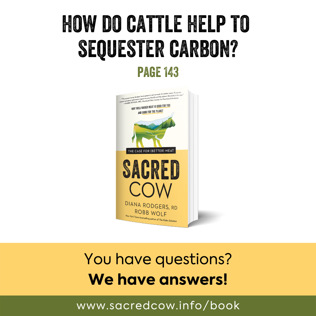SC cattle and carbon.png