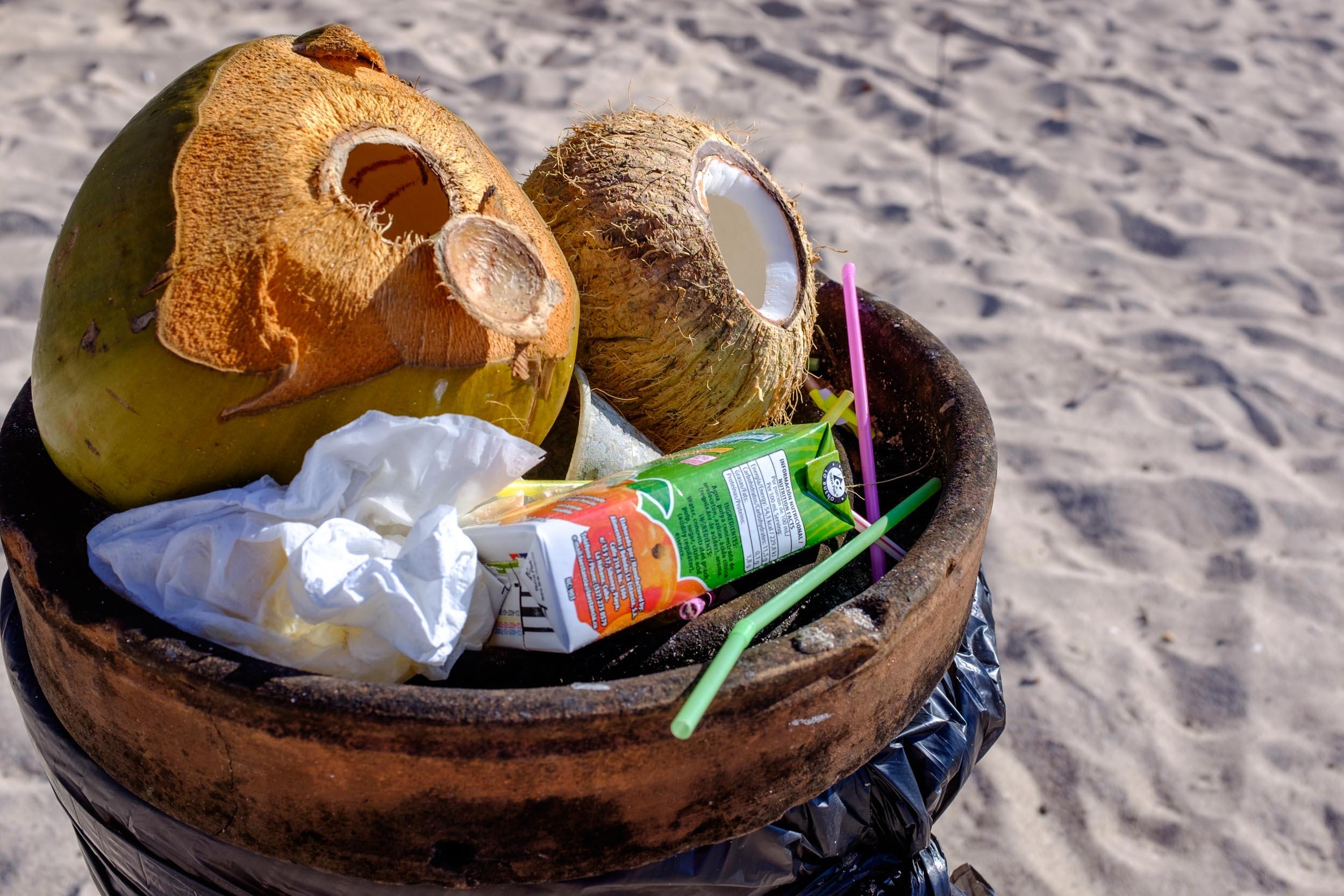Coconuts. Trinidad 2017