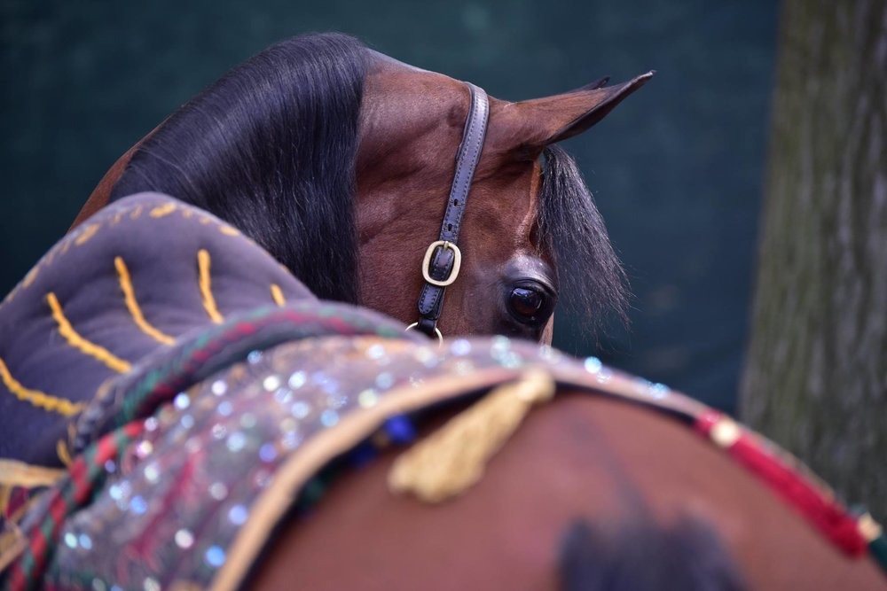 A gorgeous shot from the Arabian U.S. Open at Rolex Central Park National Horse Show in New York City.