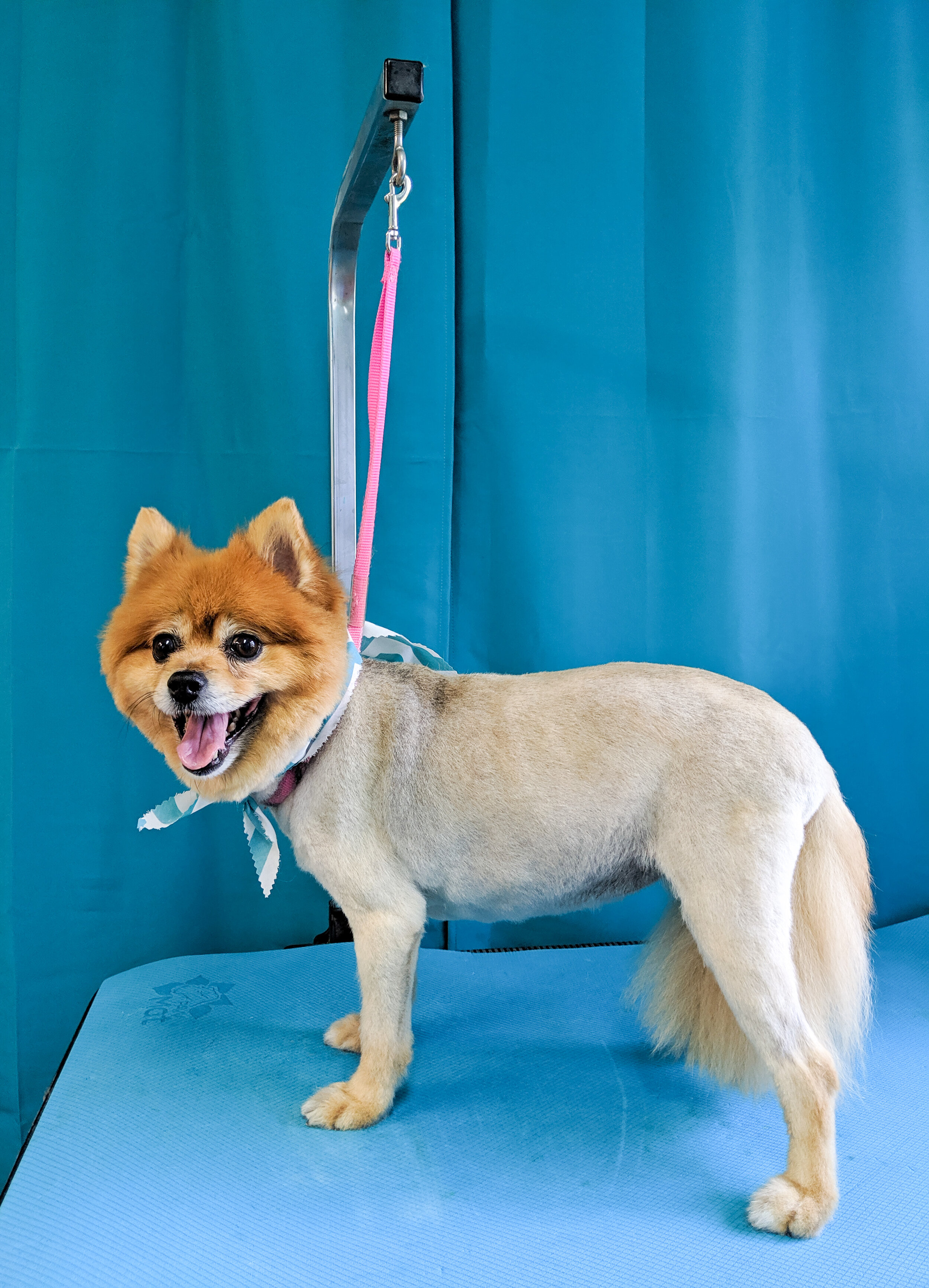 SPECIALIZE IN gERIATRIC AND SMALL DOG GROOMING! - One of our successes comes from working with older