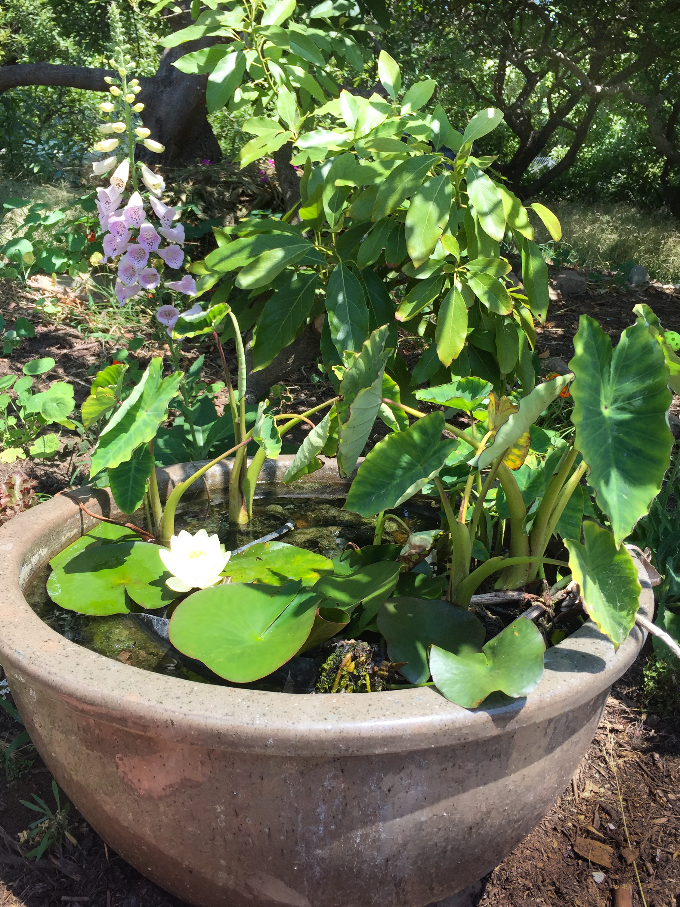 water pot.jpg