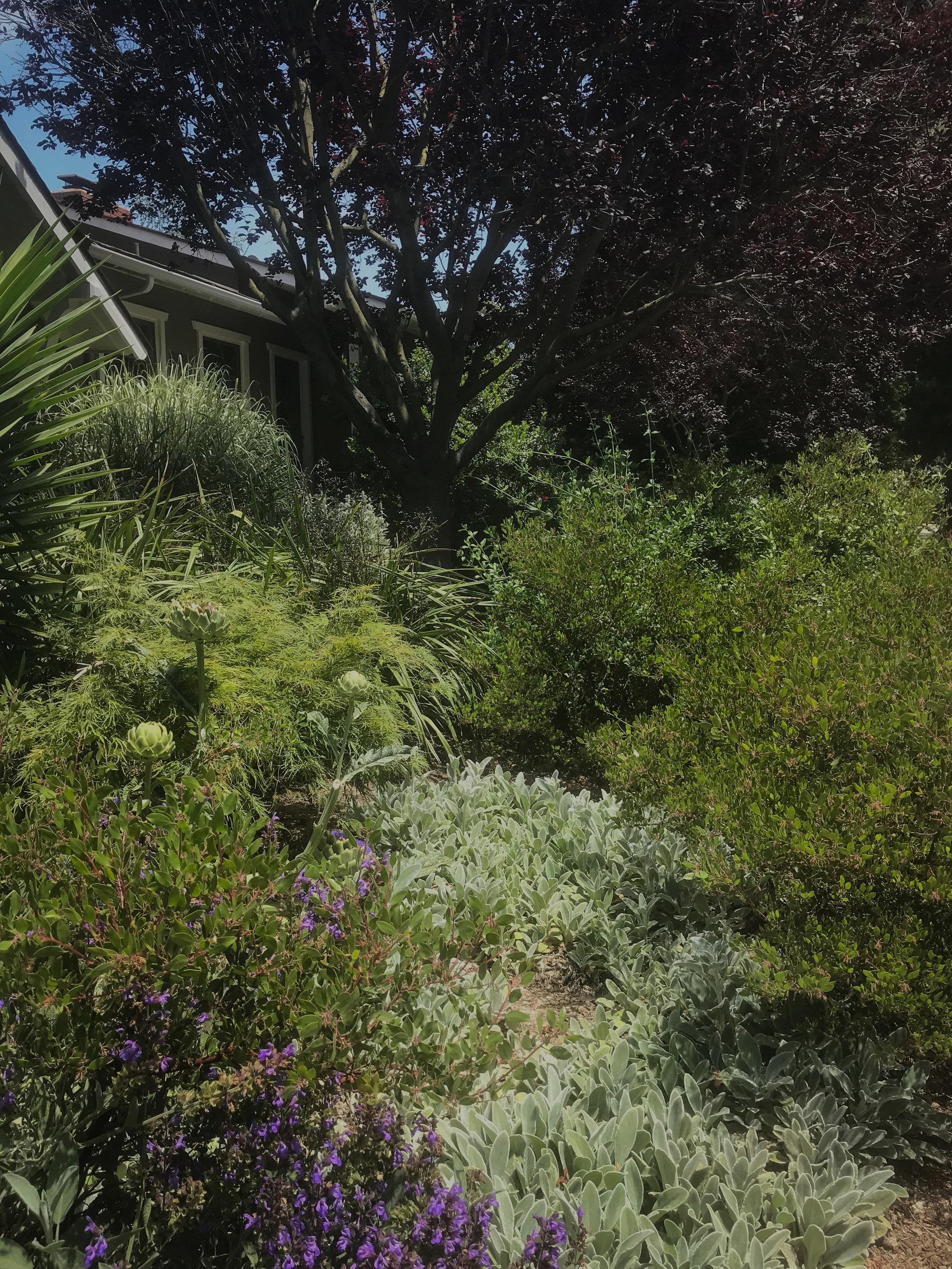 Woodland Garden -