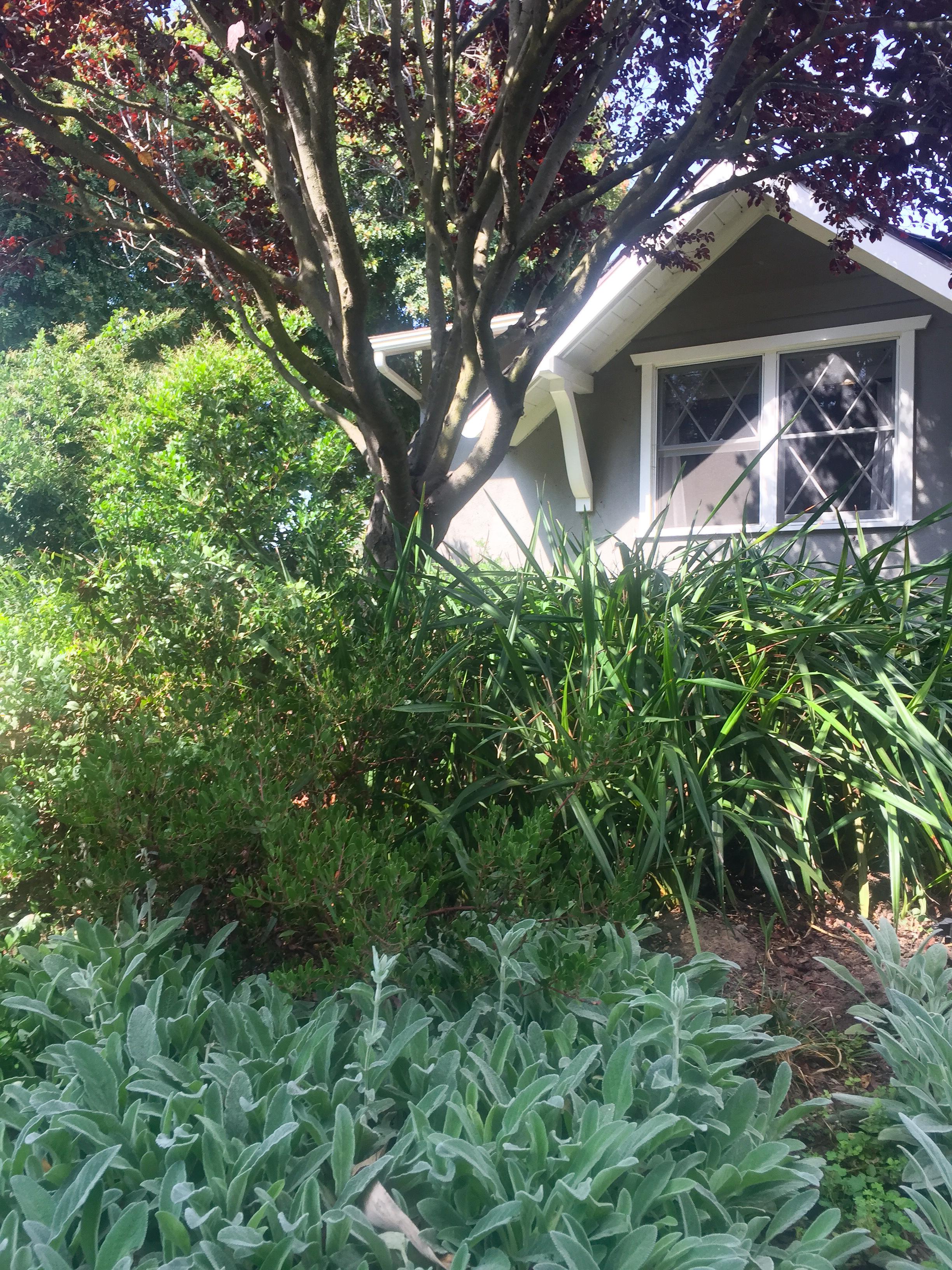 Woodland garden front view.jpg