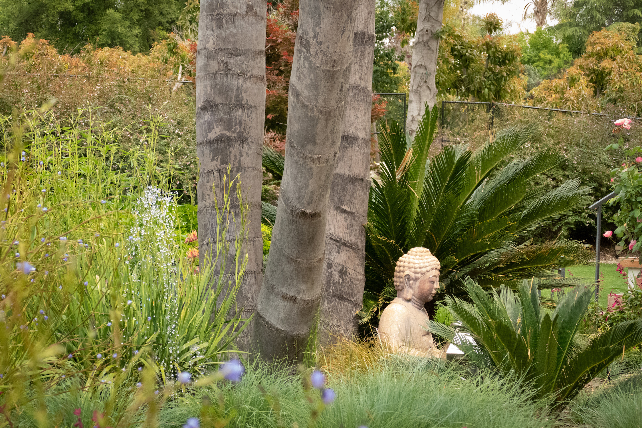 buddha_in_mini_garden.jpg