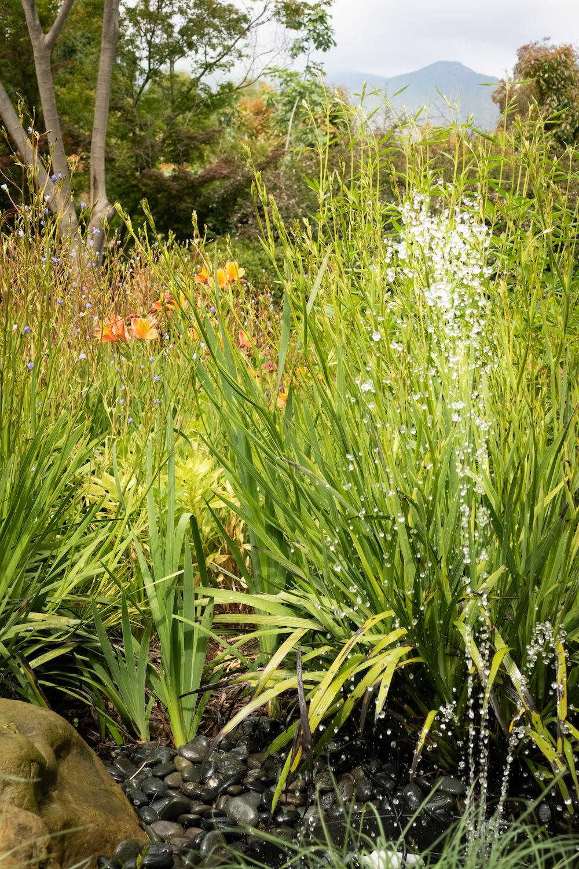 fointian_in_mini_garden 2-2.jpg
