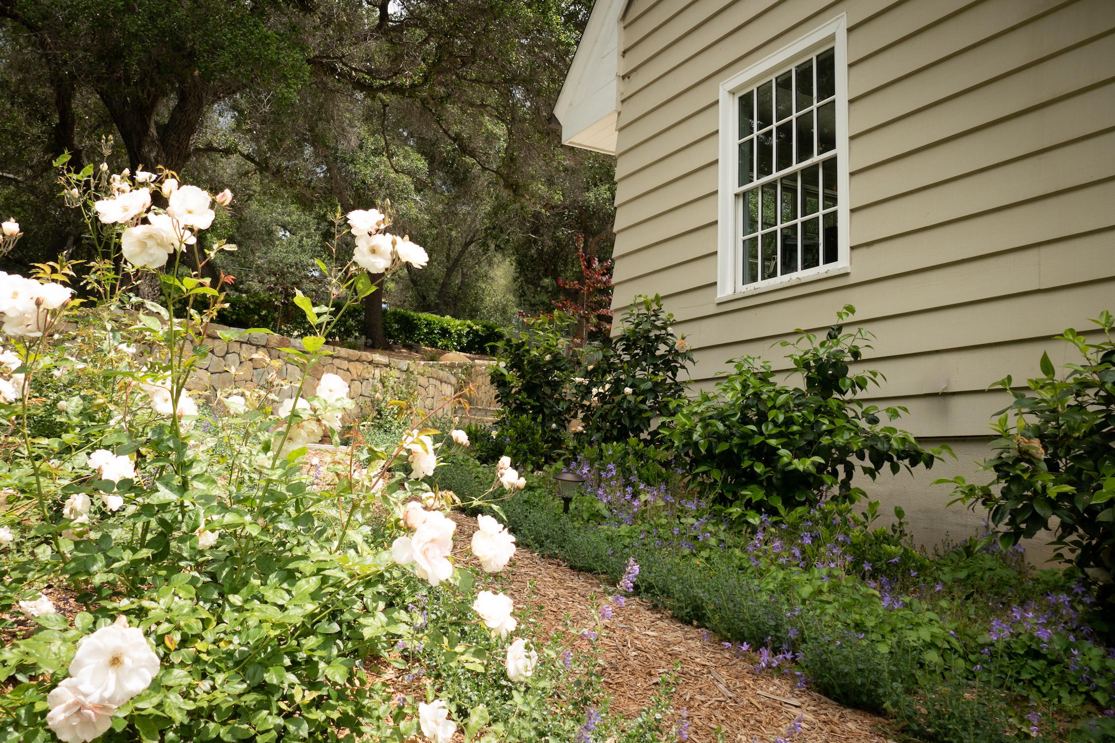 roses_in_side_yard.jpg