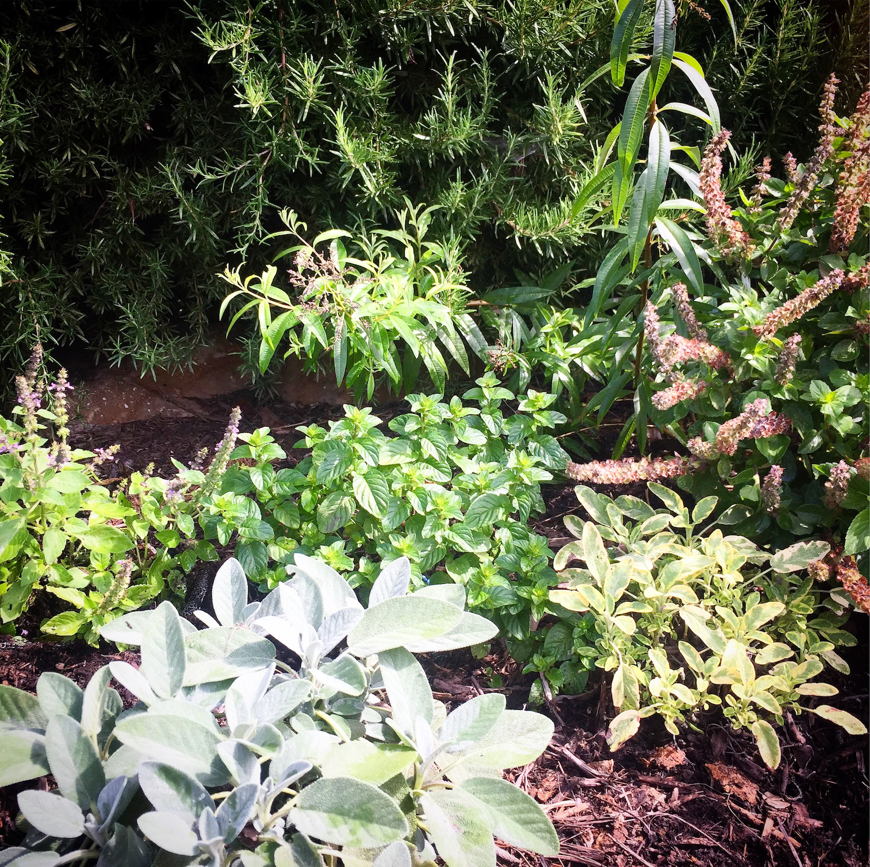 Sage, mint and basil-2.jpg