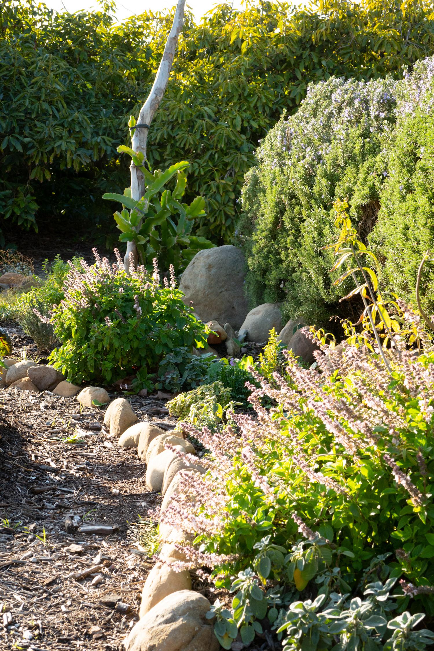 Herb garden with rock boarder.jpg