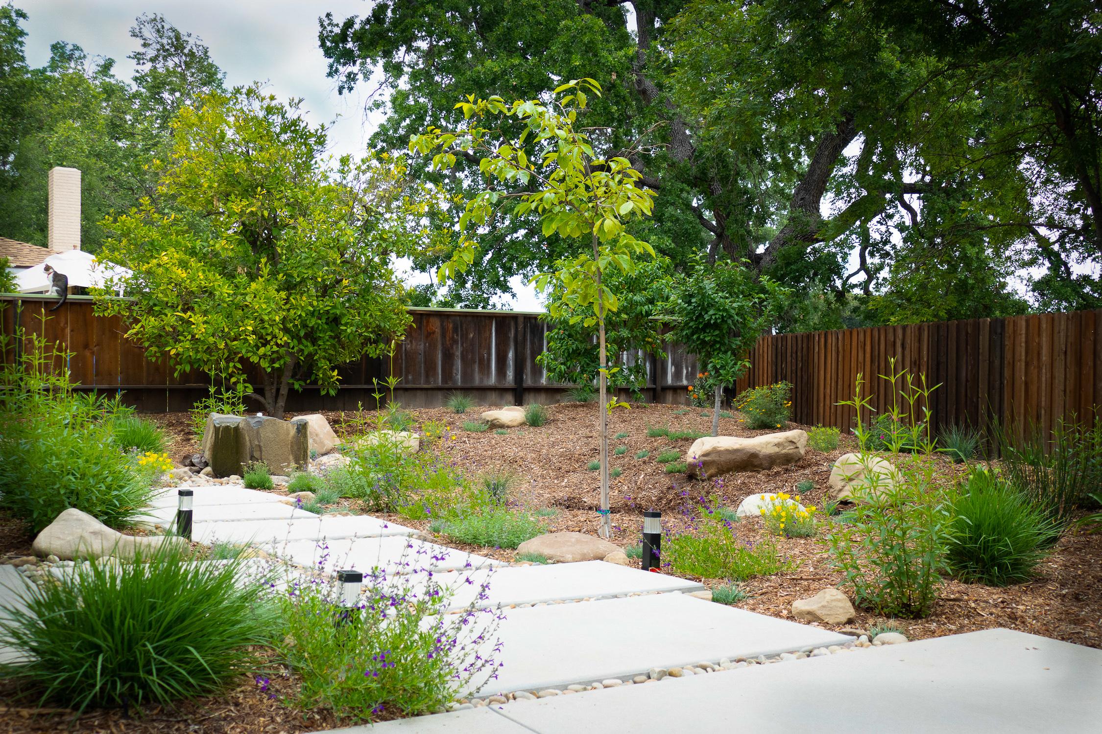 Backyard Bliss -