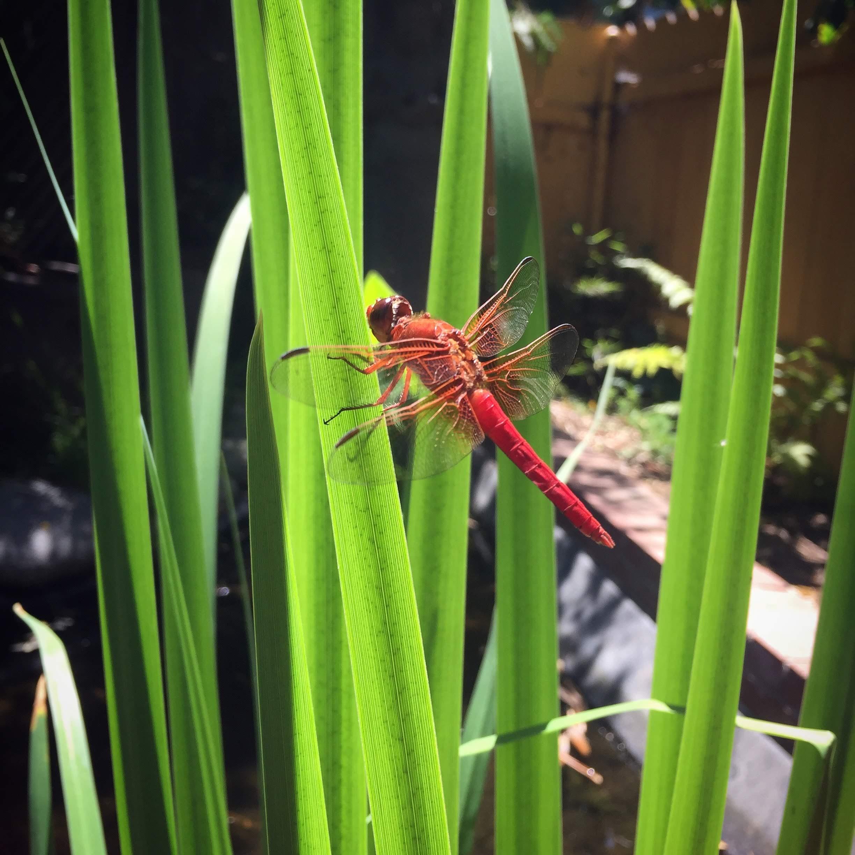 Life In The Garden -