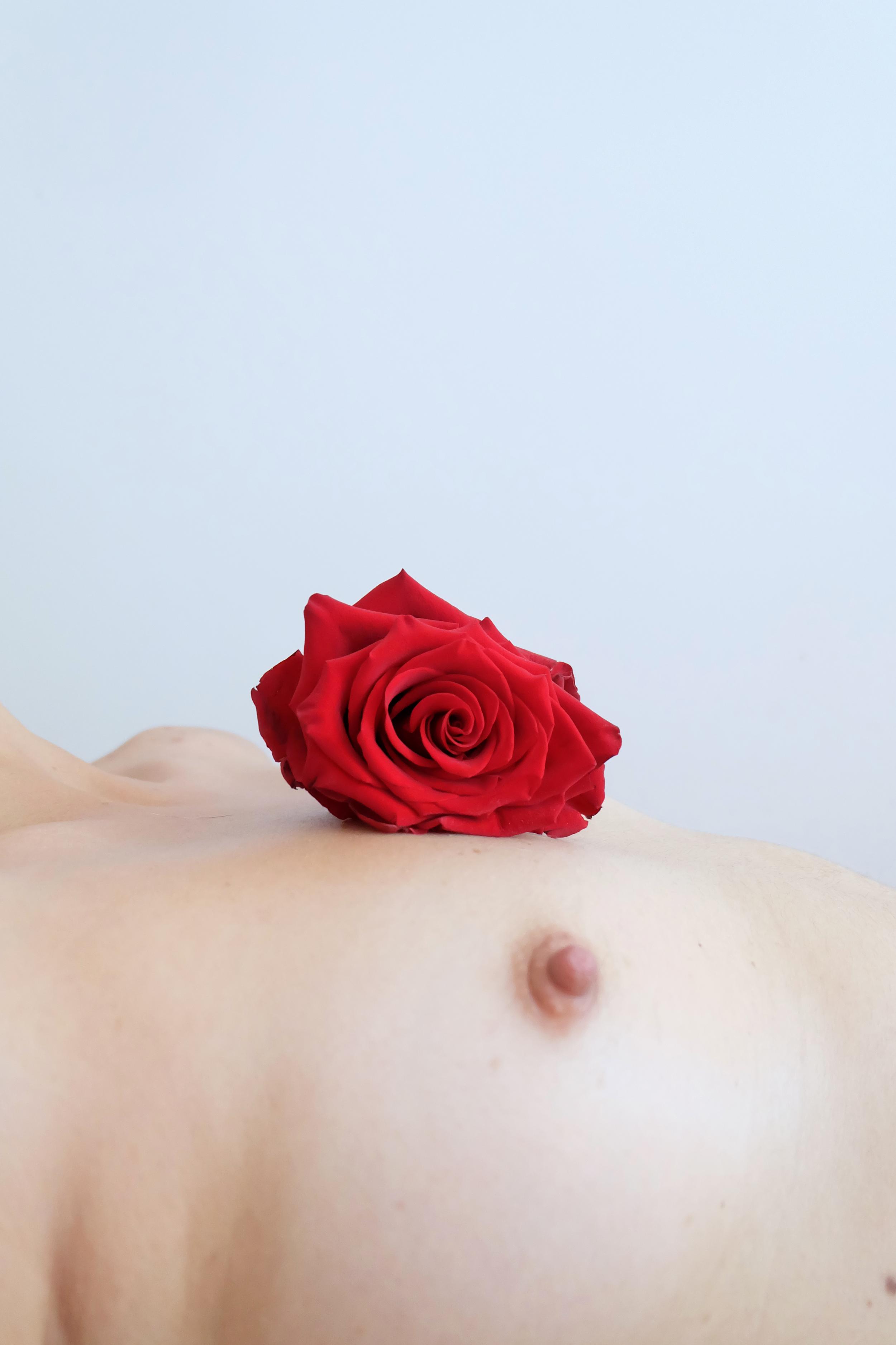 elenakoycheva_bloom_3.png