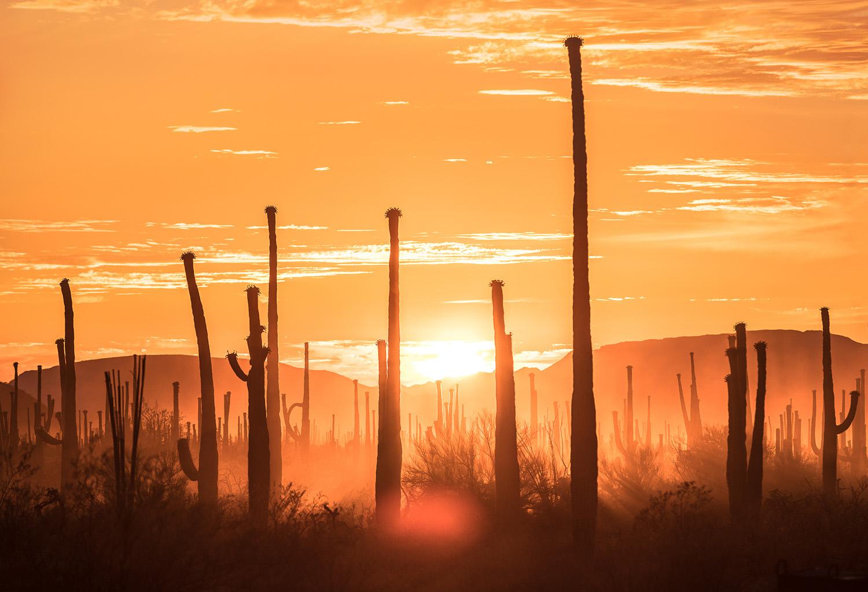 Sunset at Organ Pipe Cactus National Monument