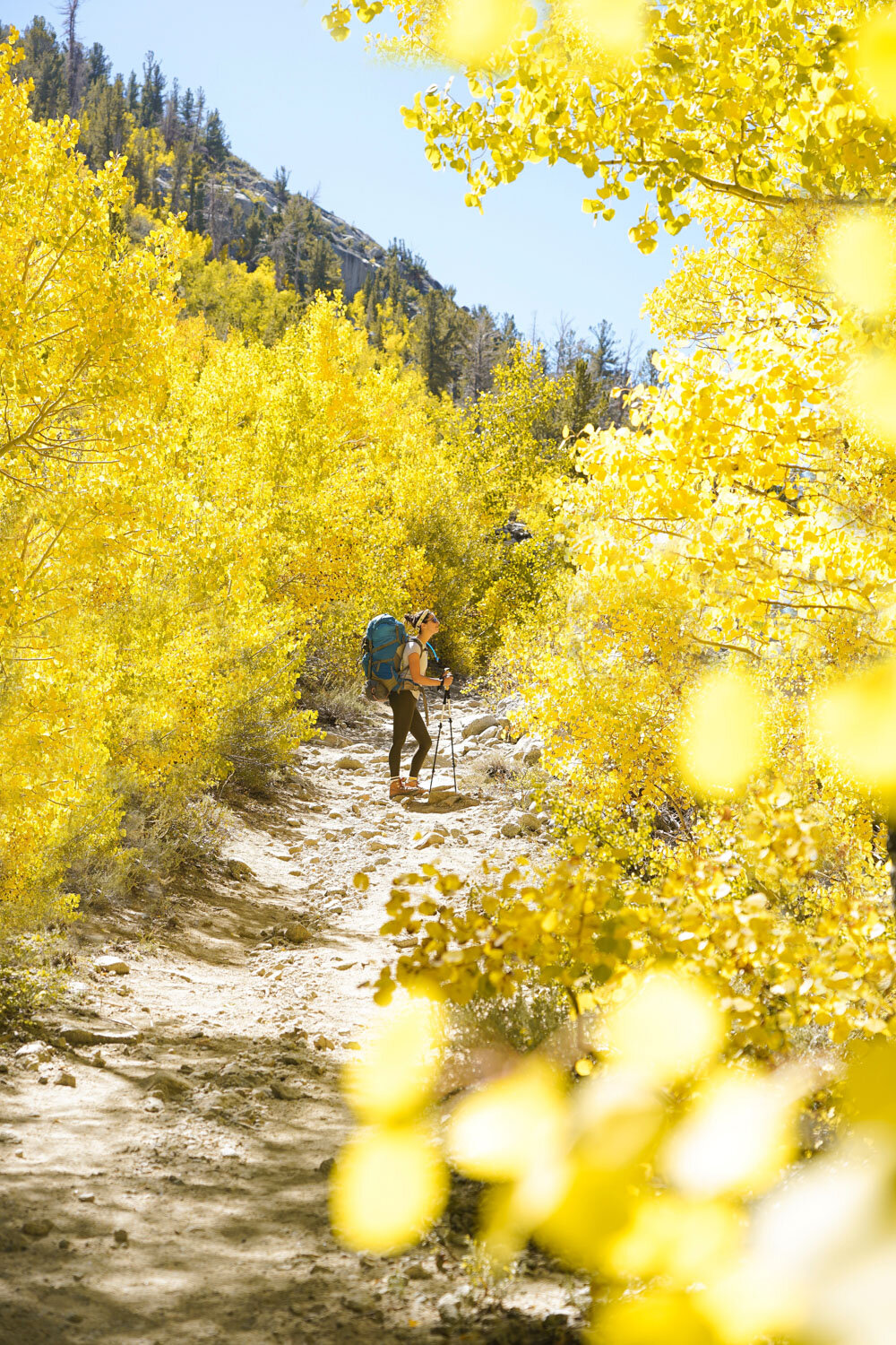 A trail rimmed with golden aspens in Bishop — photo by Noël Russell