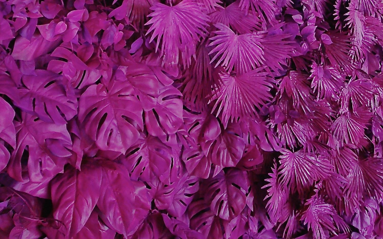Curate-Contempo-Foliage.JPG