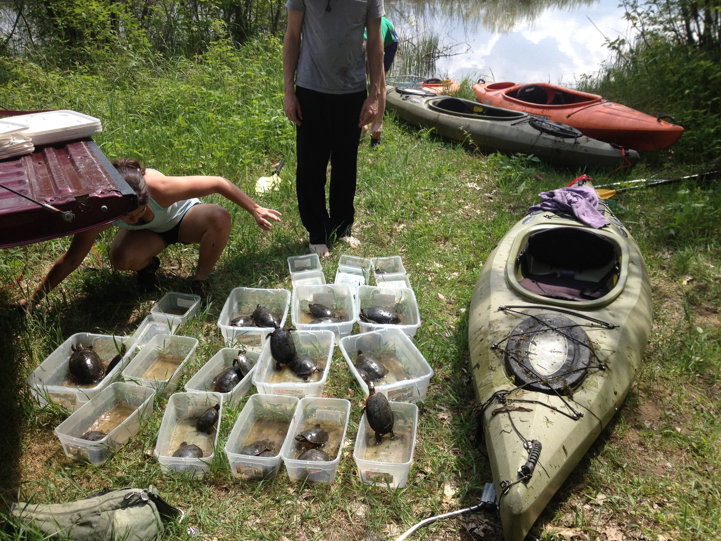 Bins of turtles next to a kayak after a successful morning of capturing