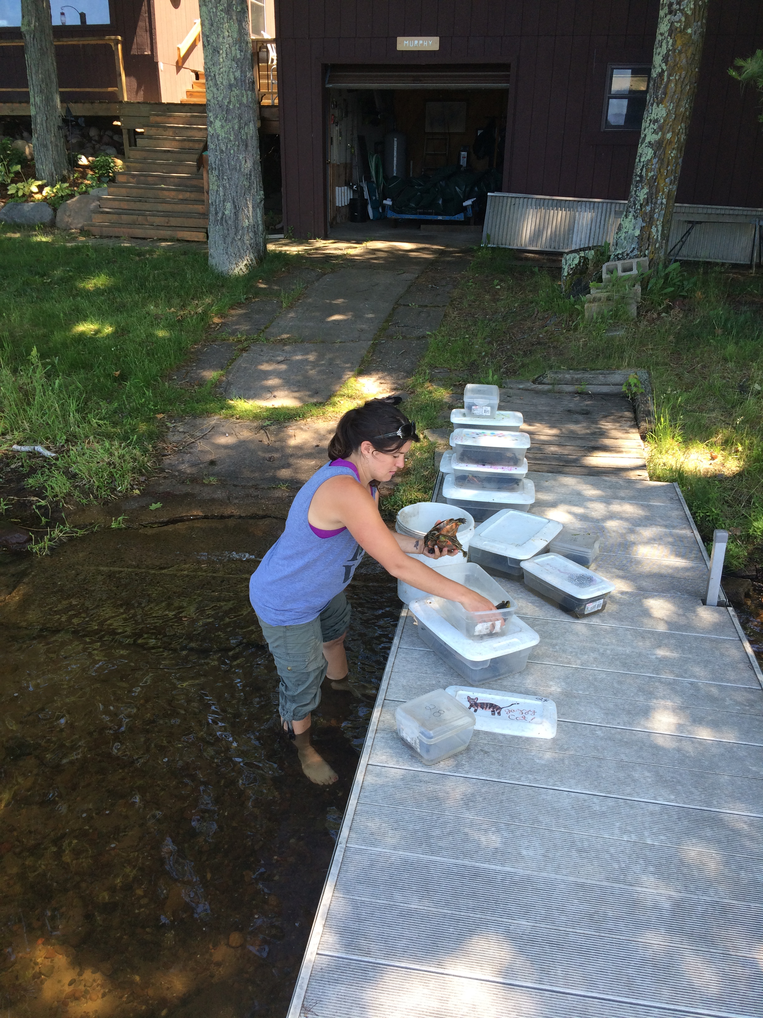 Researcher adding fresh water to bins of turtles at the field station