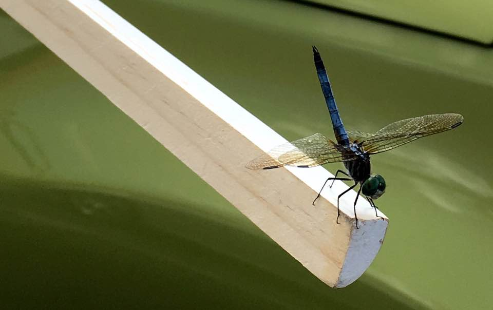 dragon-fly.jpg