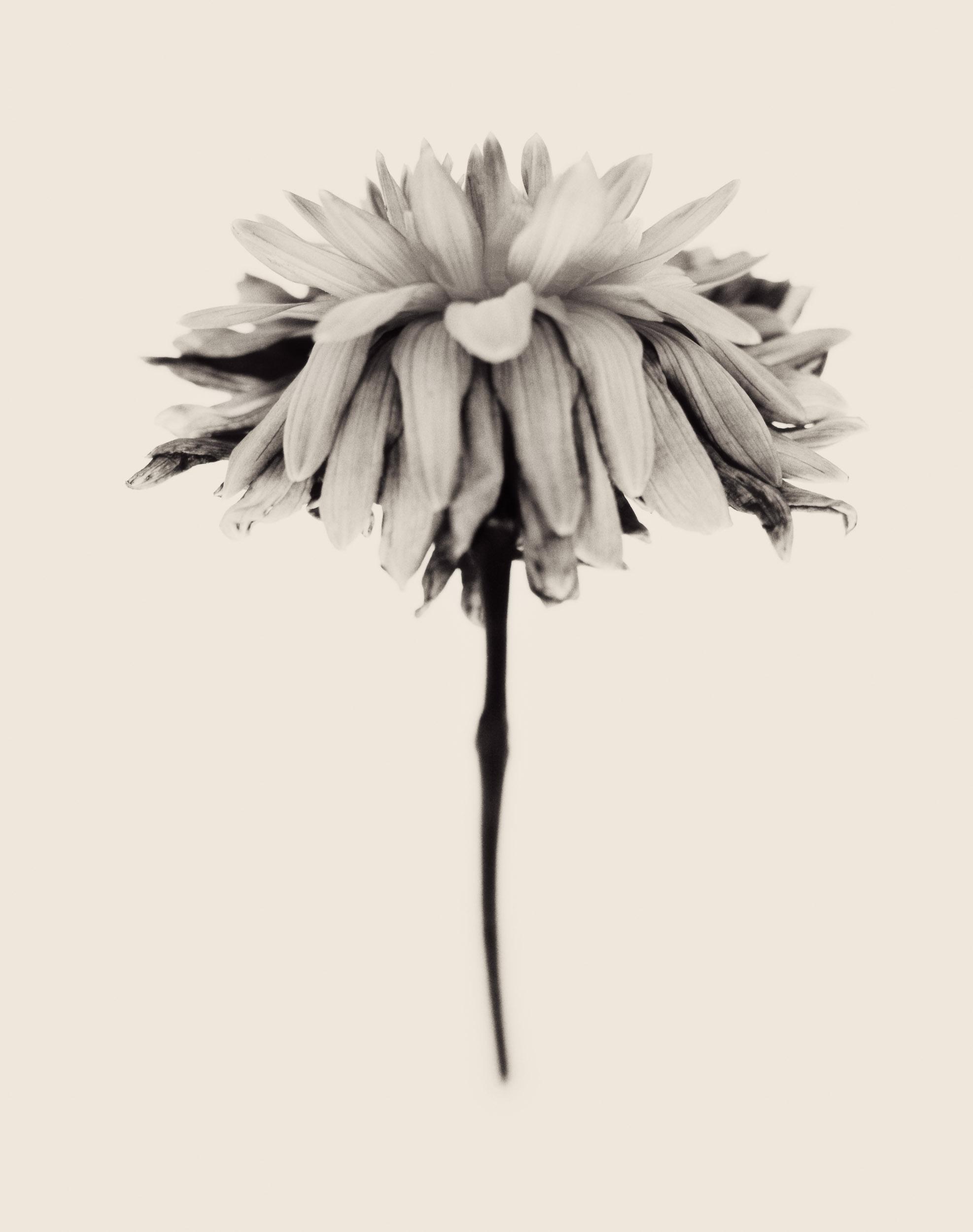 DYING FLOWER 1 polaroid.jpg