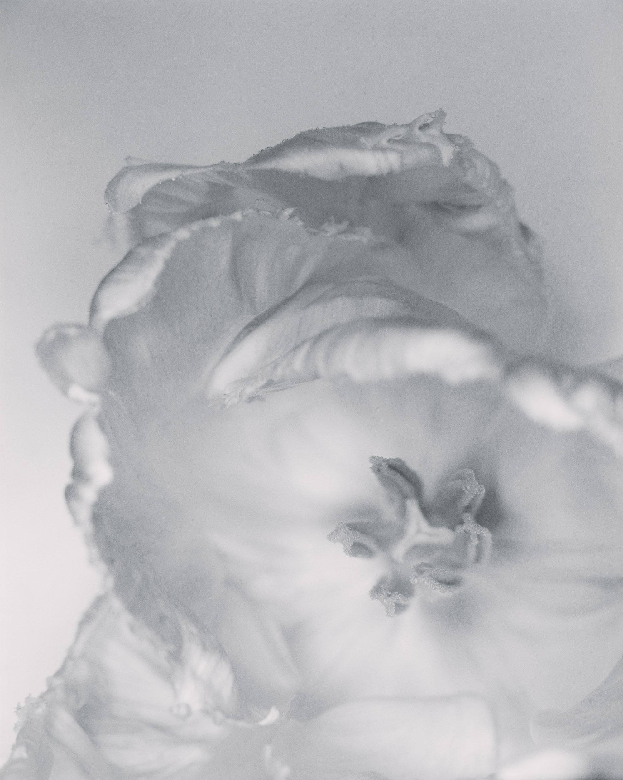 2.ICE POPPY.jpg