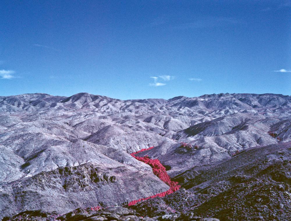 Palms Valley .jpg