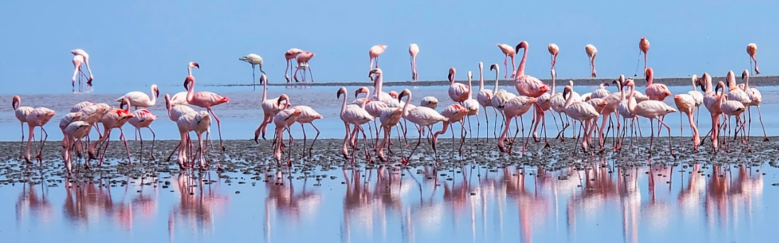 Bird Watching &Flamingo Walk -