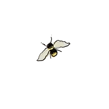 HH Bee small.png