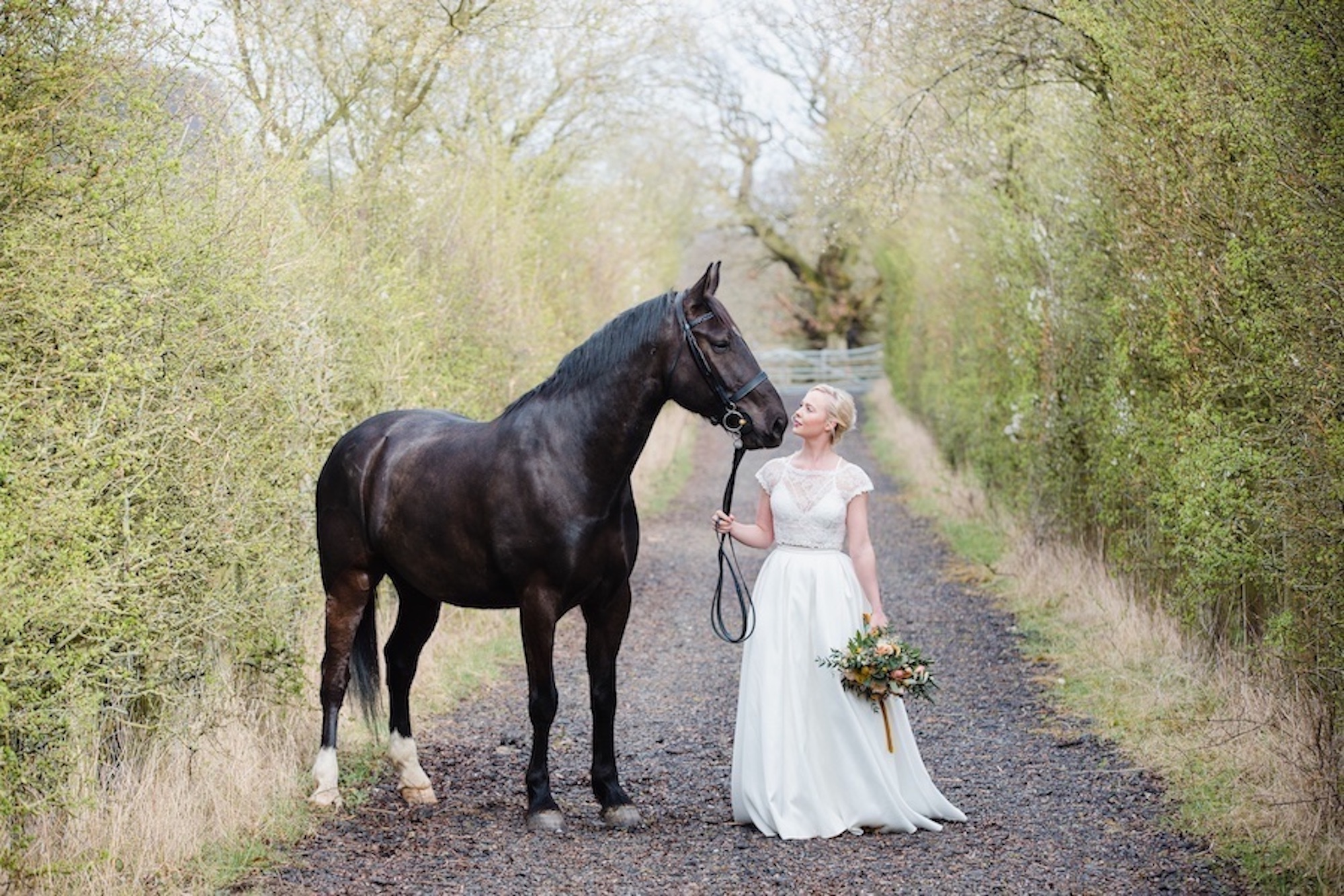 horse at wedding Nottinghamshire