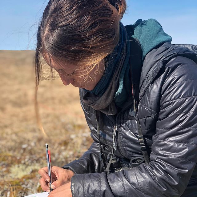 We are fortunate to be teaming with @USFWS biologists for their long term shorebird monitoring project in Utqiagvik, Alaska. @akwildfaye is representing our team and is starting her MSc. project studying Dunlin mate and site fidelity, and working with a host of other species too. All birds are captured and handled with the appropriate permits and according to standardized protocols.