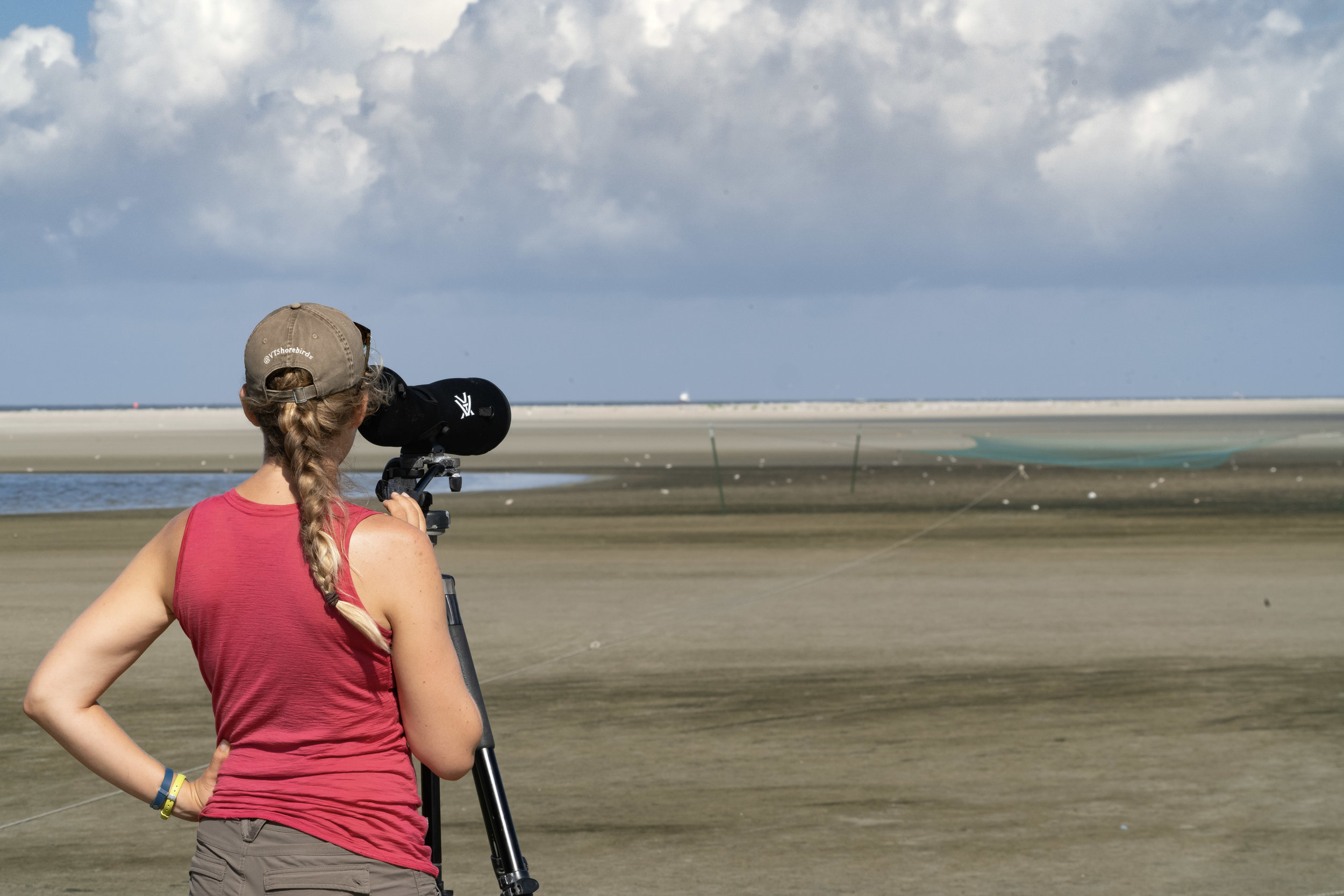 Lead author, Chelsea Weithman, trapping plovers on Ocracoke Island, NC.