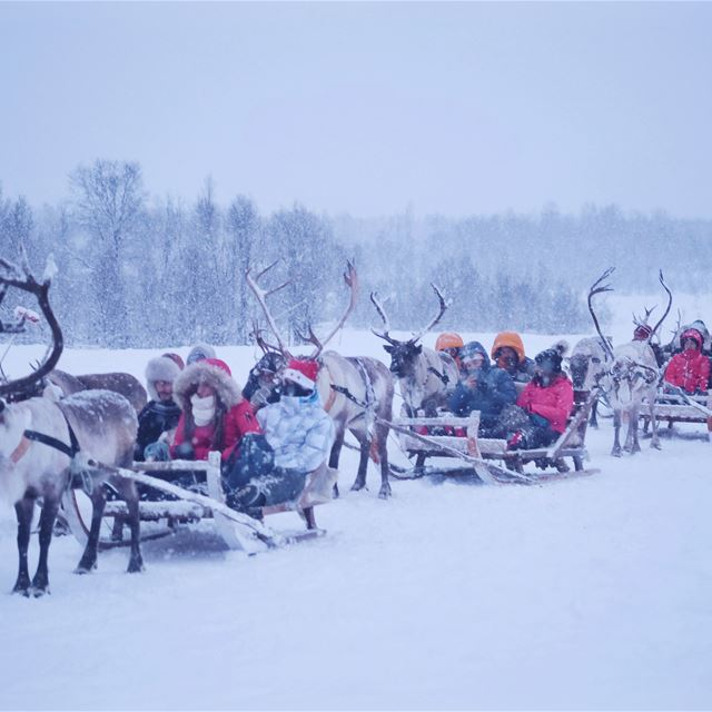 Sami Arctic Cruise in Norway 3.jpg