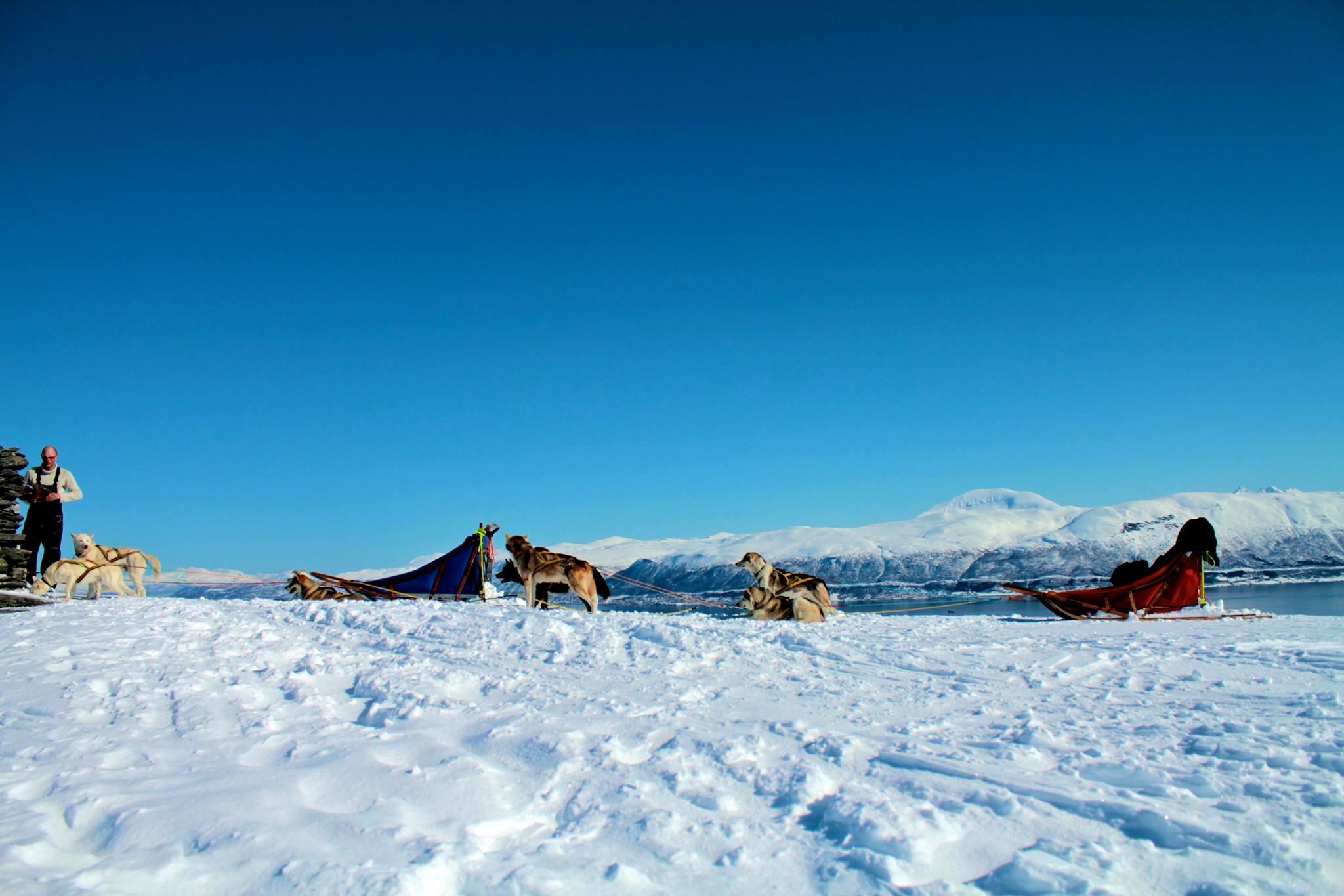 Dog sledding Arctic Cruie In Norway 2.jpg
