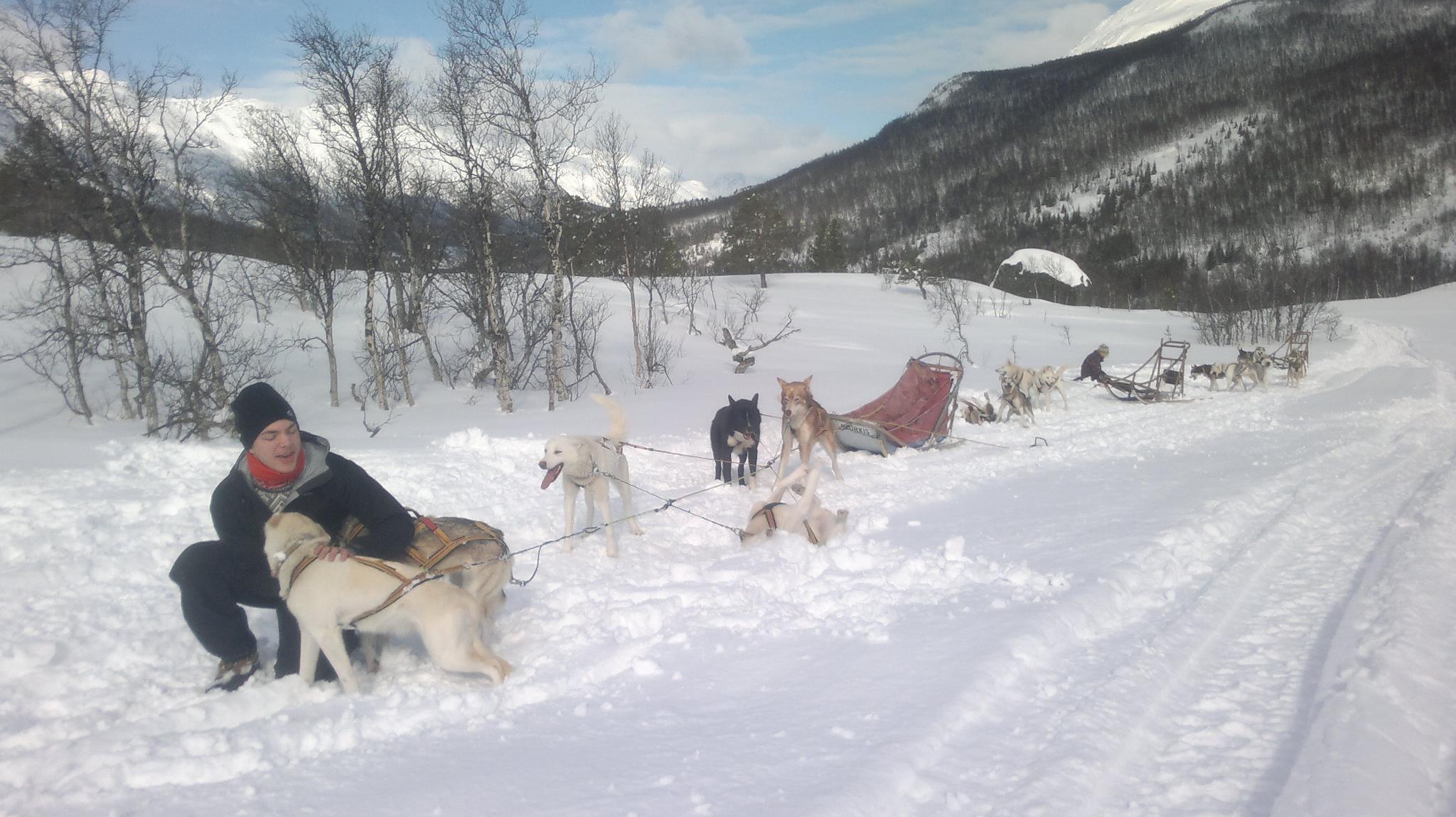 Dog sledding Arctic Cruie In Norway 3.jpg