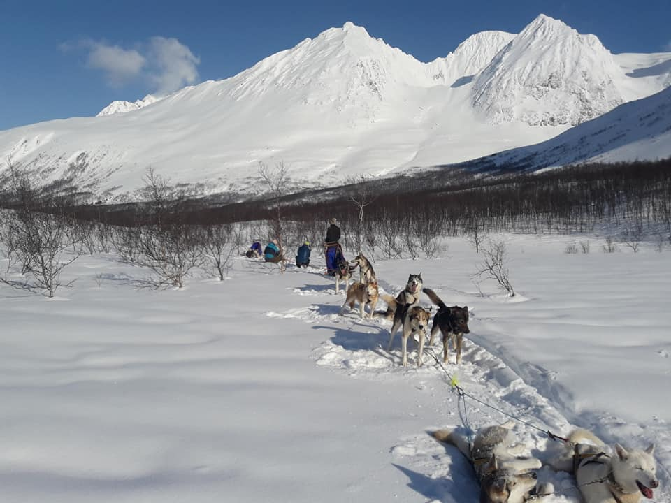 Dog sledding Arctic Cruie In Norway 4.jpg