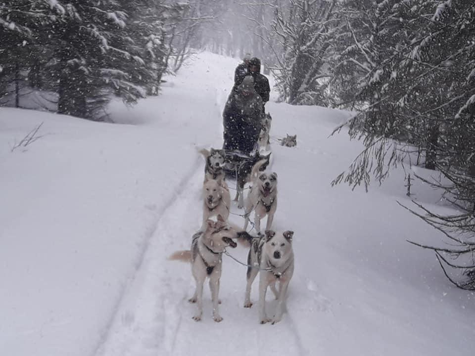 Dog sledding Arctic Cruie In Norway 5.jpg