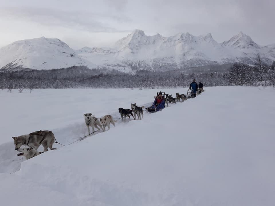 Dog sledding Arctic Cruie In Norway 6.jpg