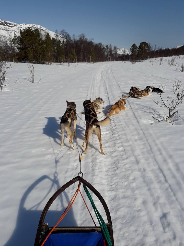 Dog sledding Arctic Cruie In Norway 7.jpg
