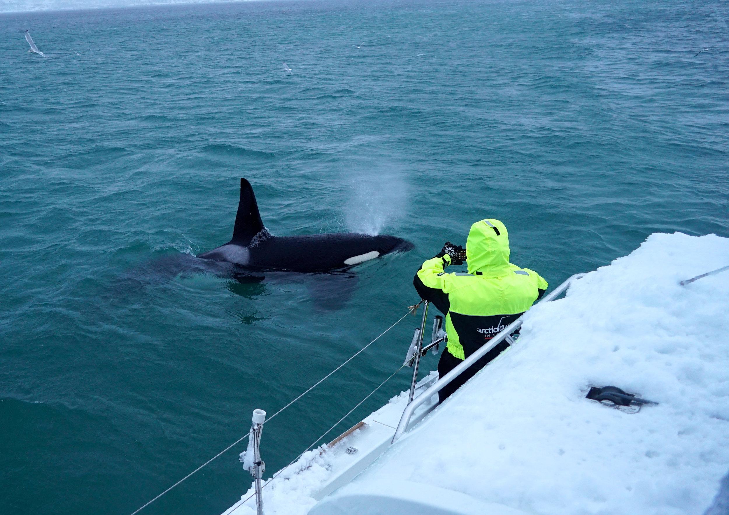 Orca at Arctic Princess.jpg