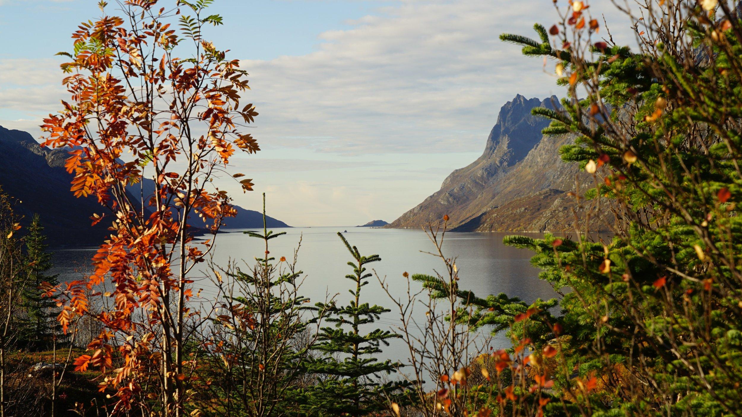 Arctic X - Fjordsightseeing.jpg