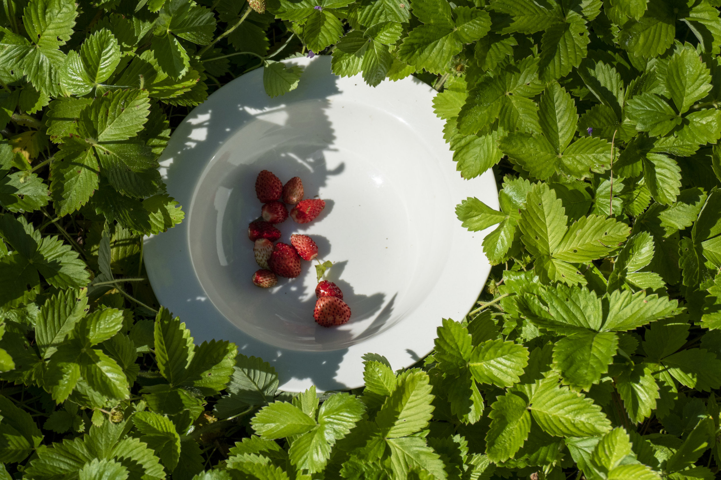 wildstrawberries_2.jpg