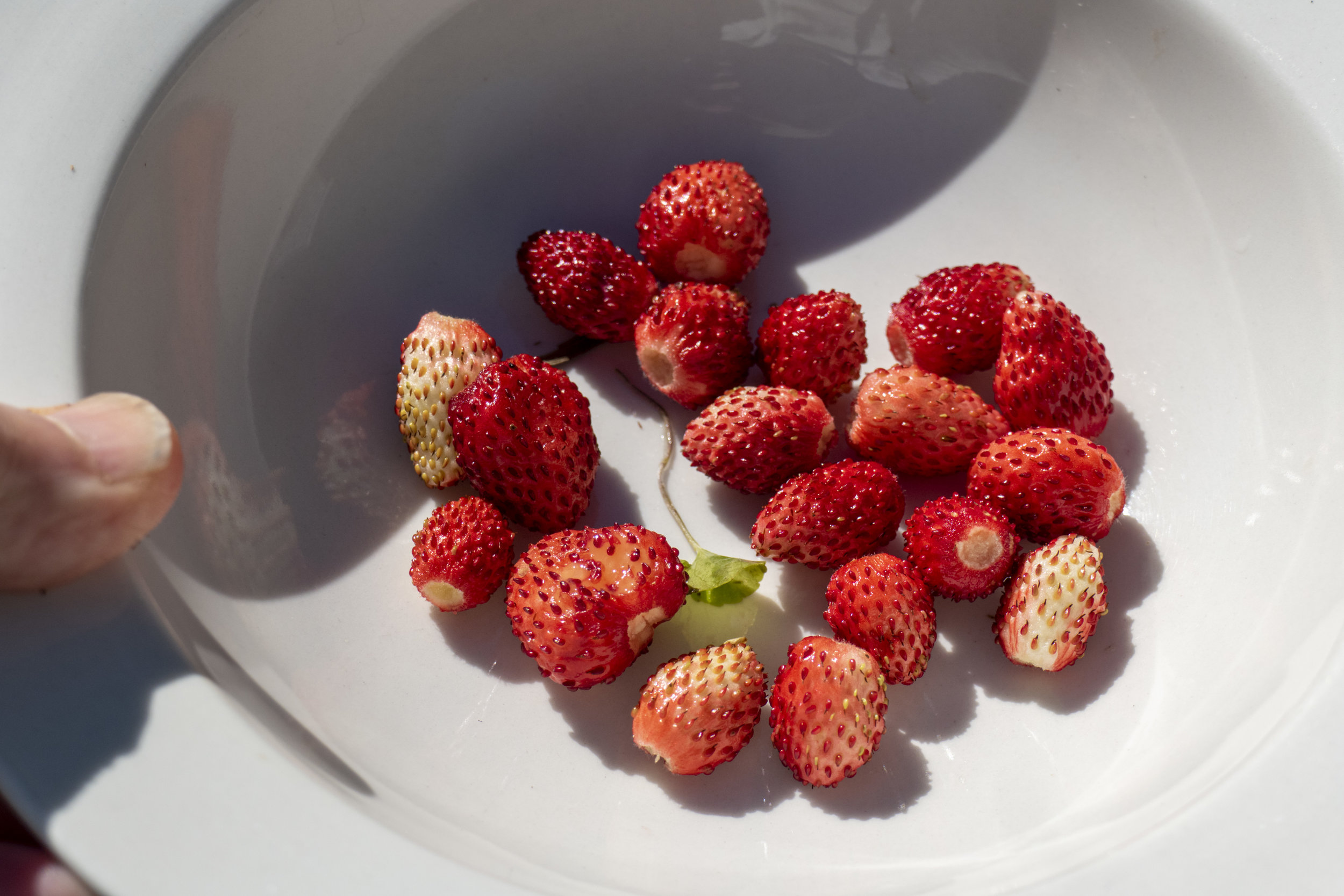 wildstrawberries_4.jpg