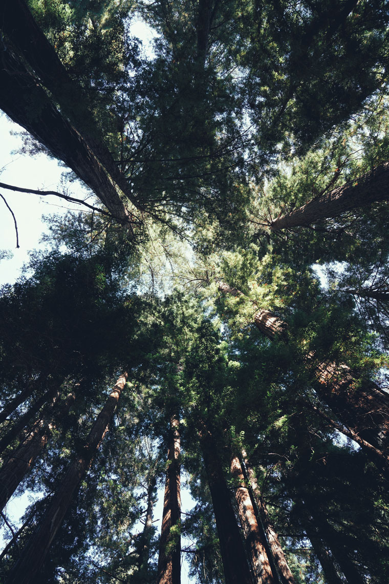 Underneath-the-Redwood-Trees.jpg