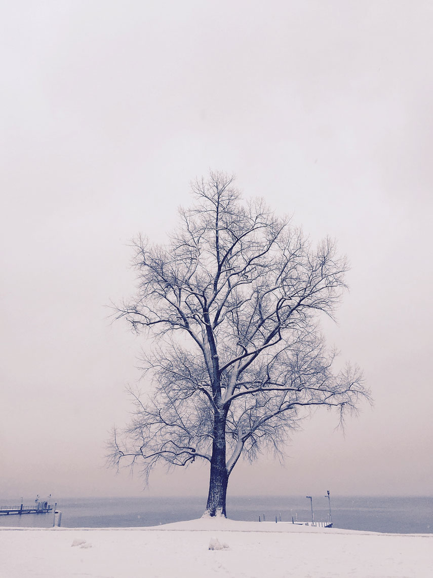 lake-zurich-tree-copy.jpg
